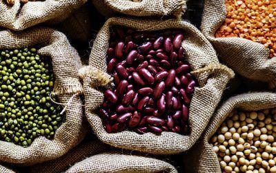 Éxito en el proyecto PROTEVEG: producción y consumo sostenible de proteína vegetal en Navarra